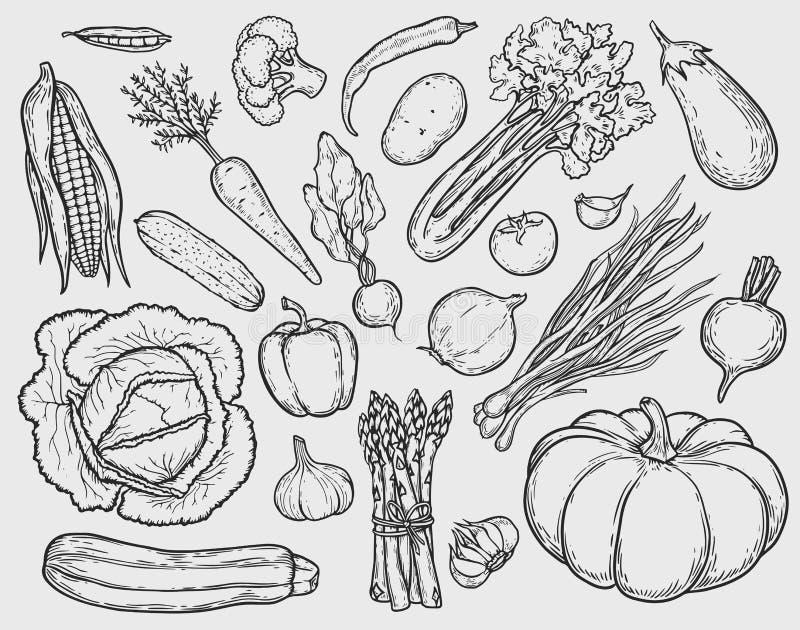 установите овощи бесплатная иллюстрация