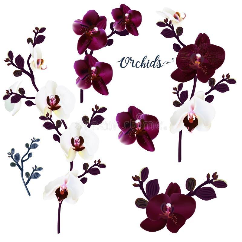 Установите орхидей вектора для дизайна иллюстрация штока