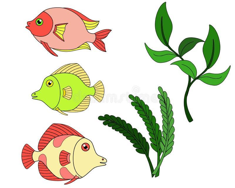 Установите пестротканых тропических рыб и заводов аквариума для аквариума иллюстрация штока