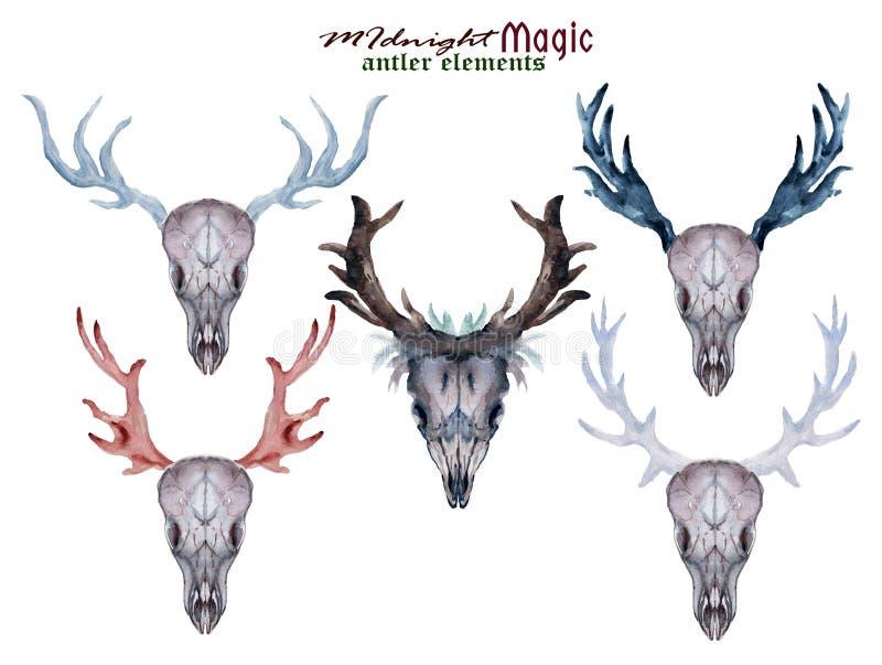 Установите покрашенных рукой цветков, листьев, antlers оленей и рожков ак иллюстрация вектора