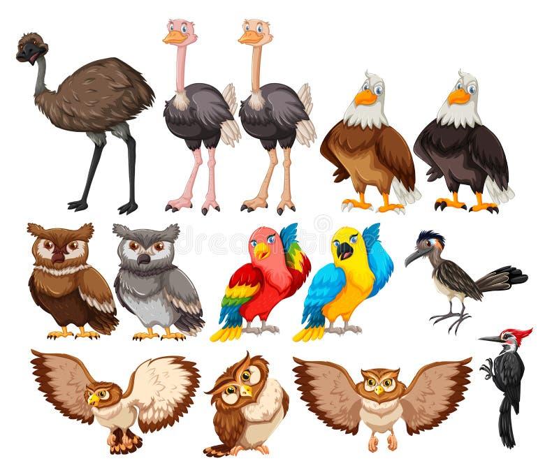 Установите птицы на белой предпосылке иллюстрация вектора