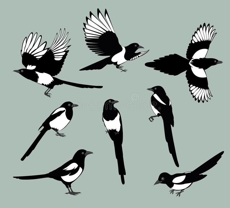 Установите птиц сороки иллюстрация штока