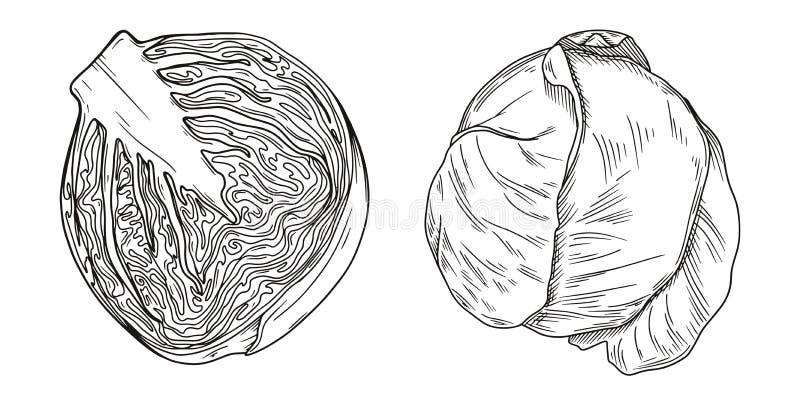 Установите различной капусты изолированной на белой предпосылке r стоковое изображение rf