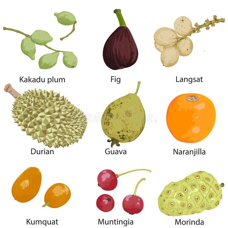 Установите различных плодов иллюстрация вектора