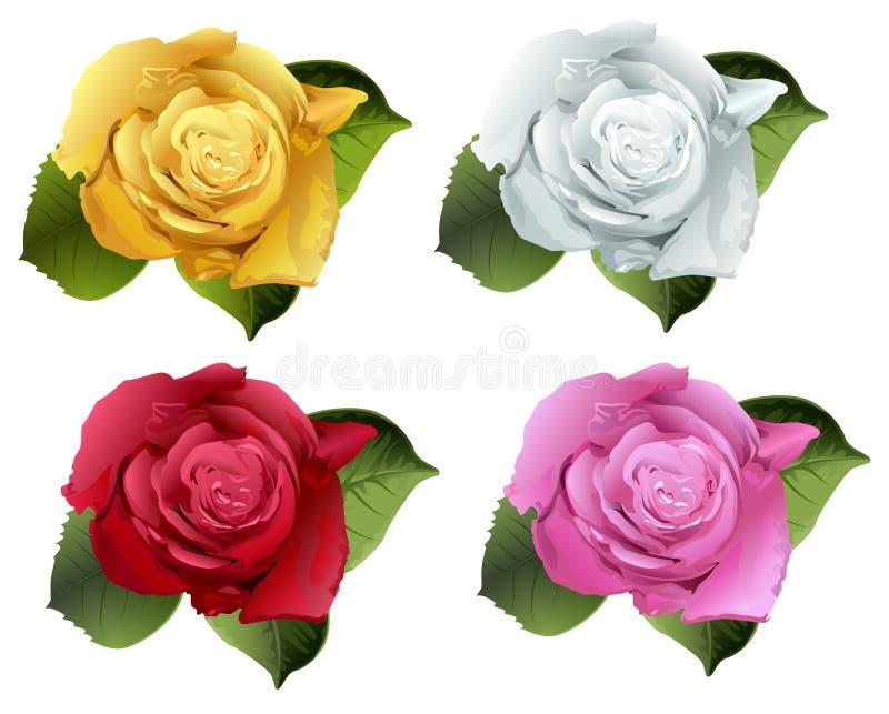 Установите розовый бутон цветка бесплатная иллюстрация