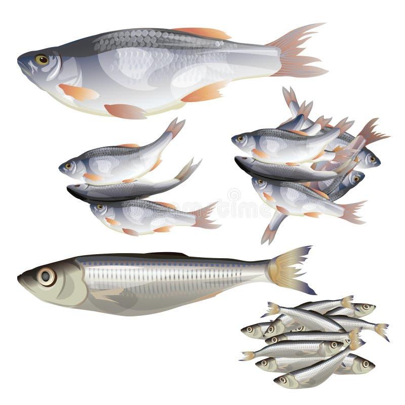 Установите рыб вектора стоковые изображения rf