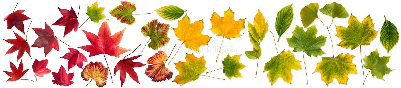 Установите собрание красочного падения осени выходит изолированный стоковое фото
