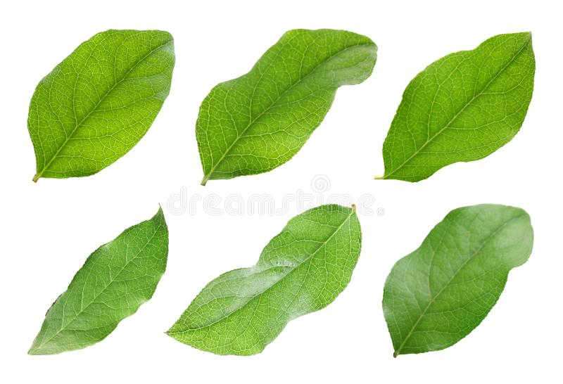 Установите с зелеными листьями яблони стоковые изображения