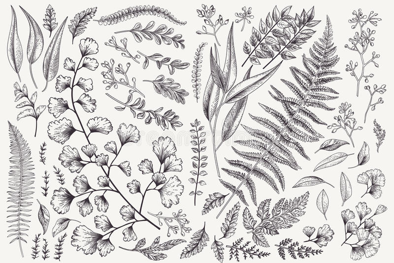 Установите с листьями и папоротниками стоковая фотография rf