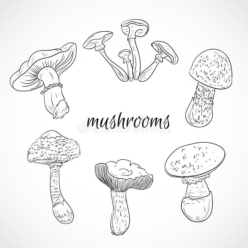 Установите с разнообразие винтажными грибами Собрание ретро черно-белой нарисованной рукой иллюстрации вектора иллюстрация штока