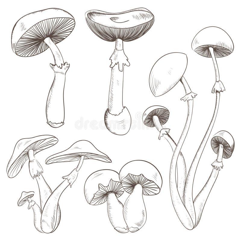 Установите с разнообразие винтажными грибами иллюстрация штока