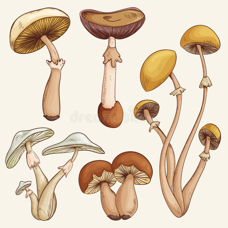 Установите с разнообразие винтажными красочными реалистическими грибами бесплатная иллюстрация
