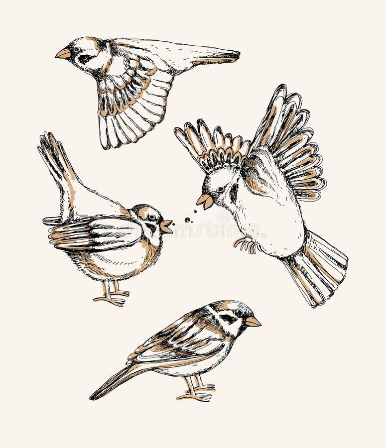 Установите с различным летанием и воробьем усаживания Нарисованная рукой красочная иллюстрация вектора бесплатная иллюстрация