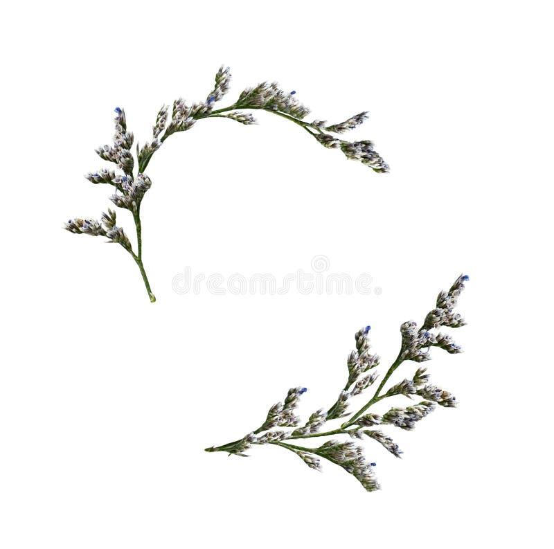 Установите флористических, который развевали расположений с цветками limonium небольшими стоковое изображение
