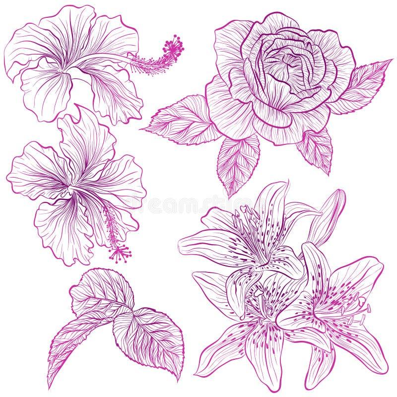 Установите цветков бесплатная иллюстрация