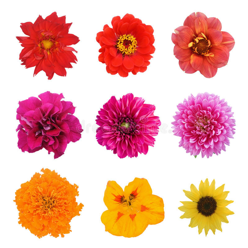 Установите 9 цветков стоковые изображения rf
