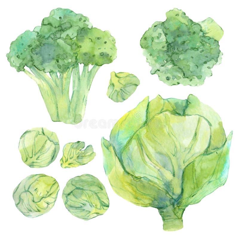 Установите эскиза акварели со свежими зелеными овощами иллюстрация штока
