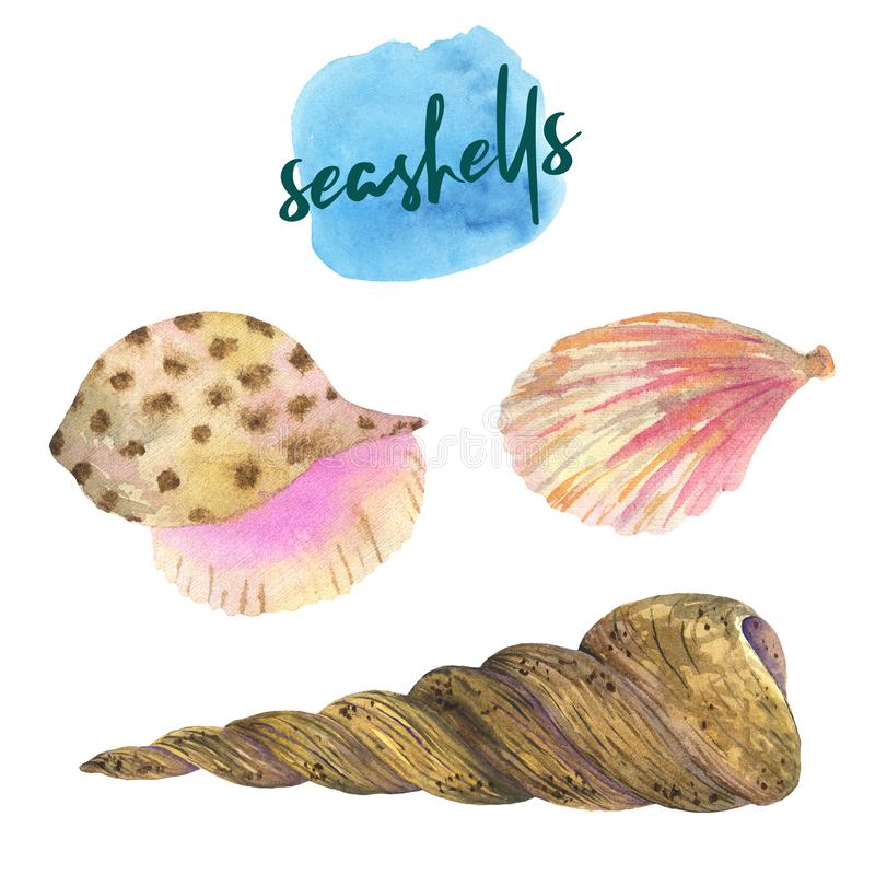Установите seashells акварели Seashells, раковины, кораллы, камни иллюстрация штока