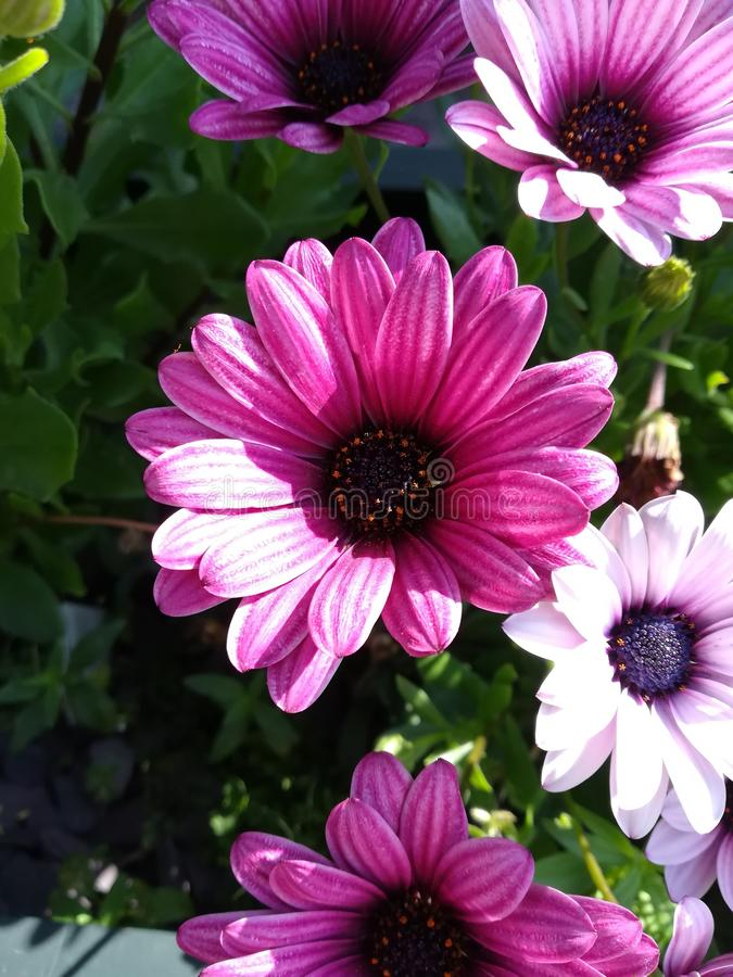 Установки цветка стоковые фотографии rf