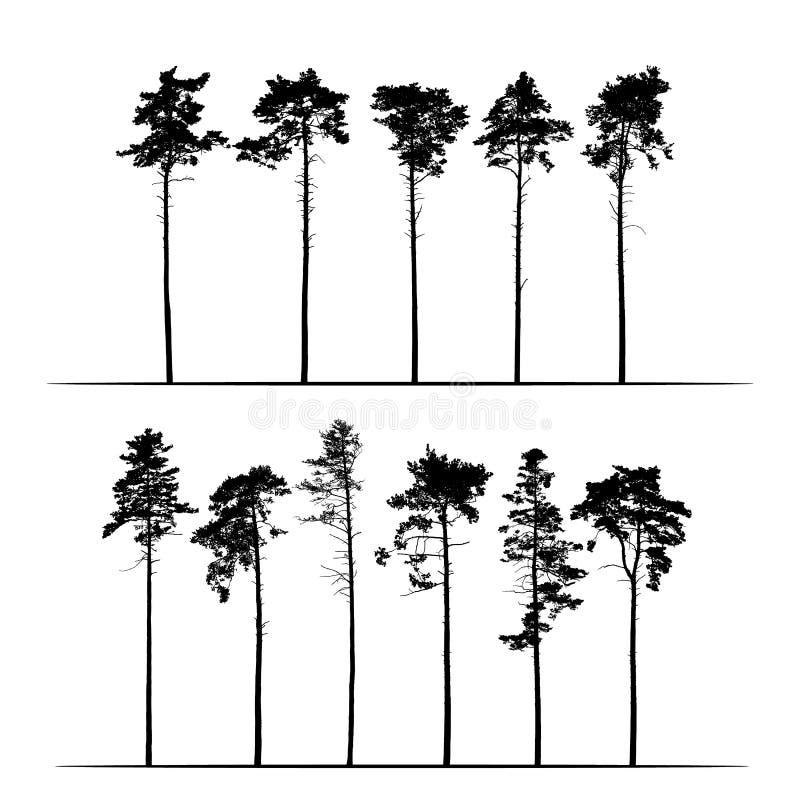 Установленная реалистическая иллюстрация высокорослых coniferous сосен Изолированный на белой предпосылке, вектор бесплатная иллюстрация