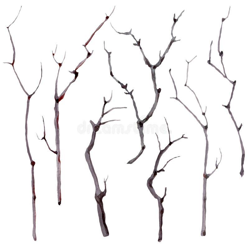 Установленные ветви акварели иллюстрация вектора