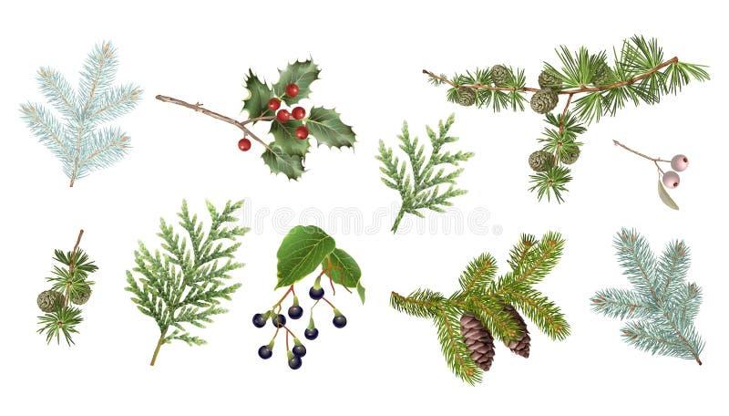 Установленные ветви зимы бесплатная иллюстрация