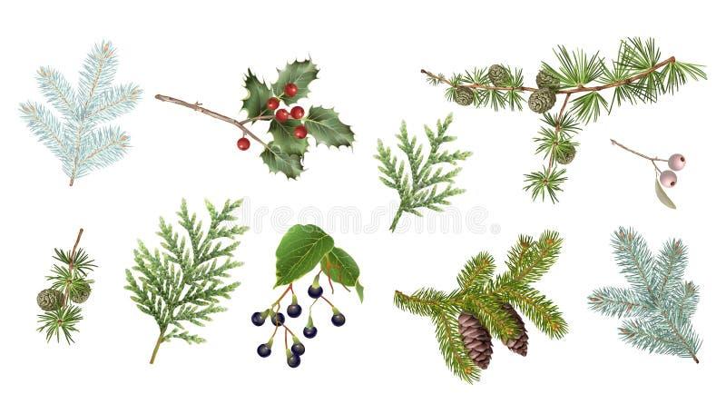 Установленные ветви зимы иллюстрация вектора