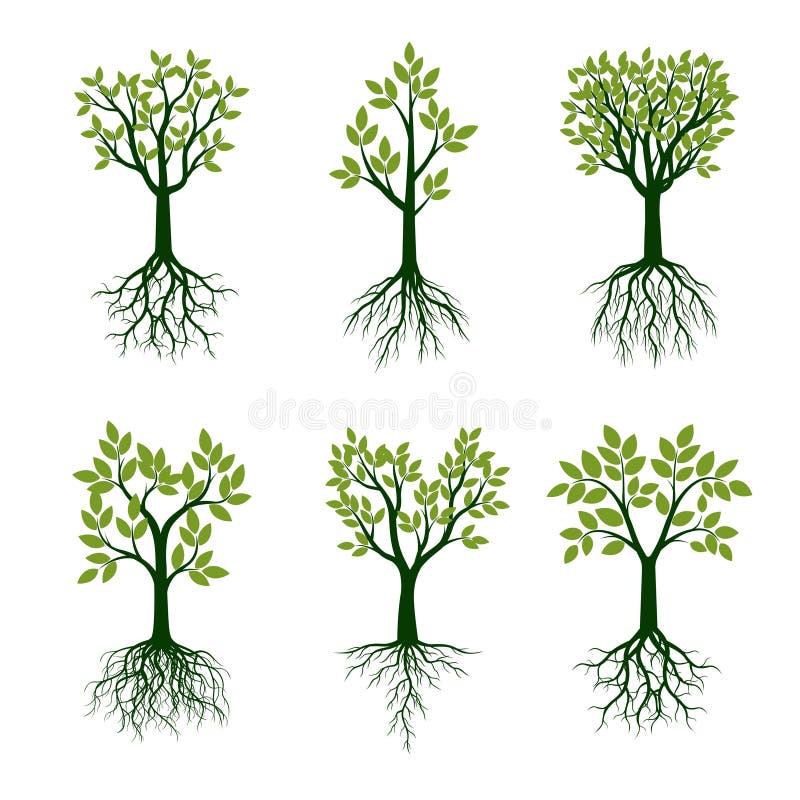 Установленные зеленые деревья весны с корнями также вектор иллюстрации притяжки corel иллюстрация штока