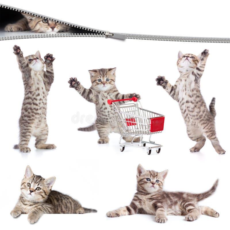 Установленные коты изолированными стоковое изображение