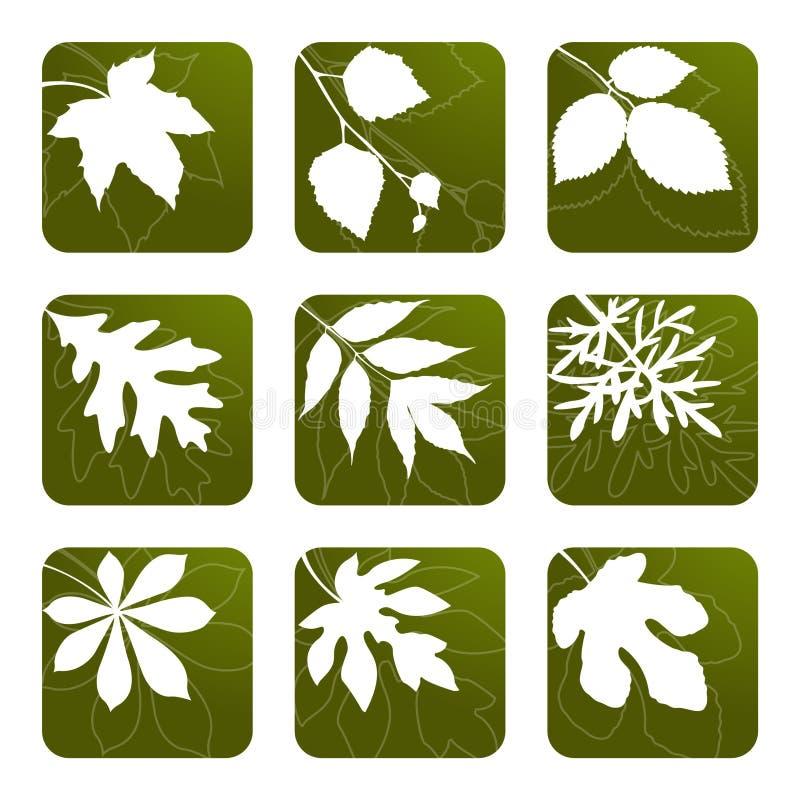 установленные листья