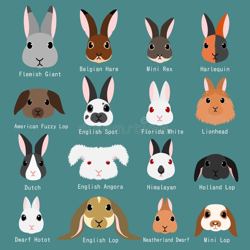 Установленные породы кроликов иллюстрация штока
