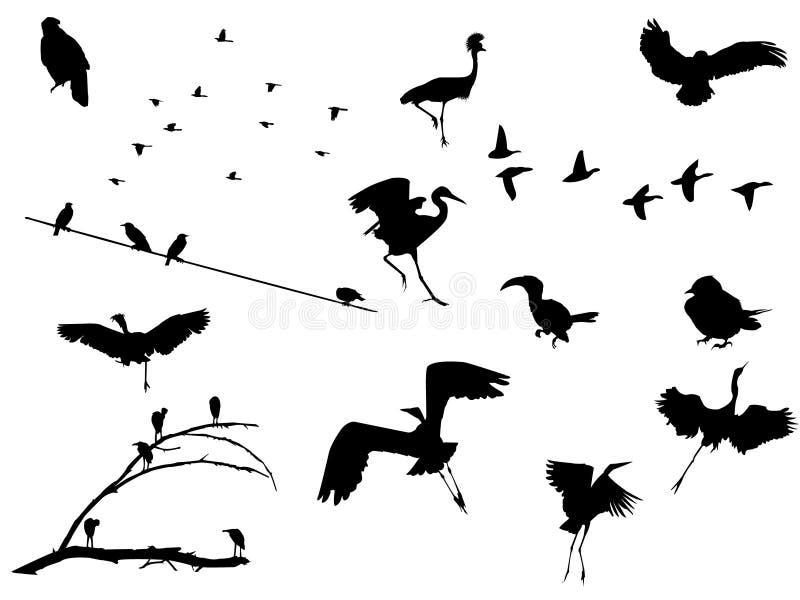 установленные птицы