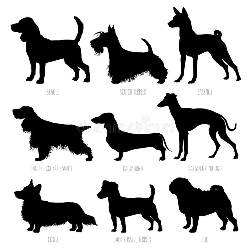 Установленные силуэты пород собаки Высоко детальная, ровная иллюстрация вектора иллюстрация штока