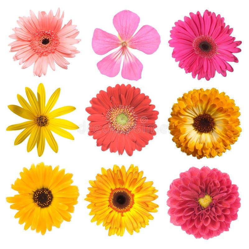 установленные цветки стоковые фото