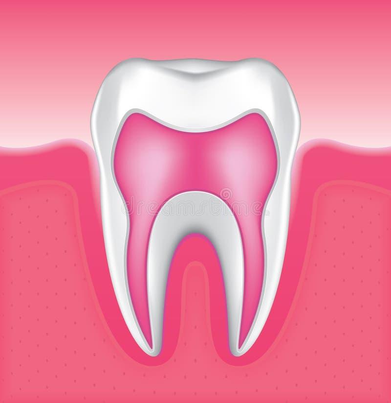 установленный зуб 4 иллюстрация штока