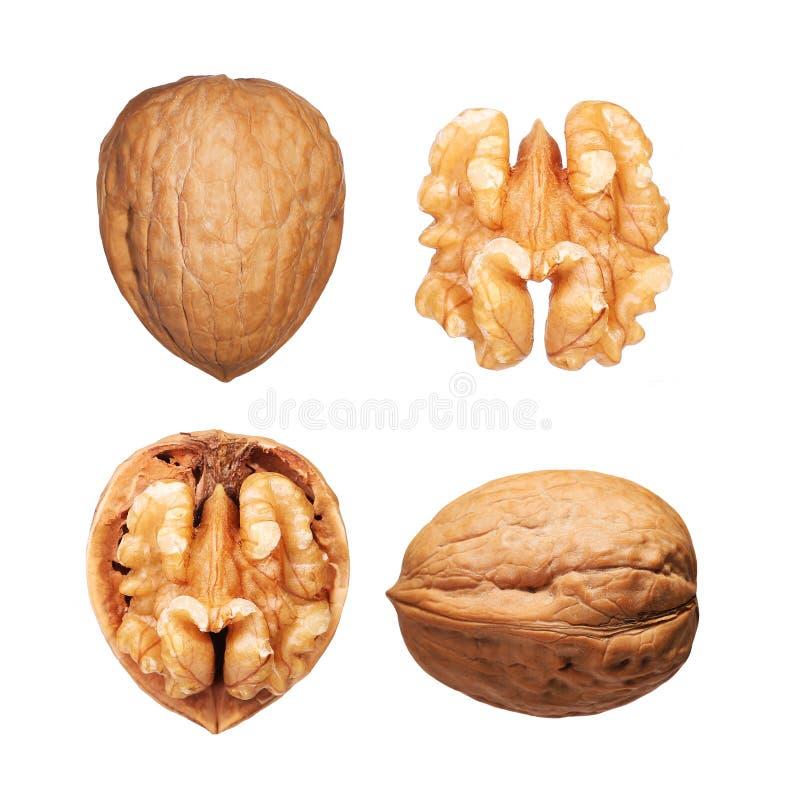 Установленные грецкие орехи изолированными стоковое изображение rf