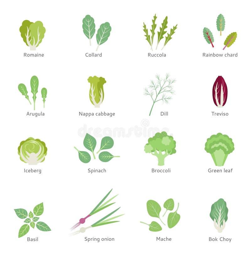 Установленные значки вектора густолиственных овощей плоские иллюстрация вектора