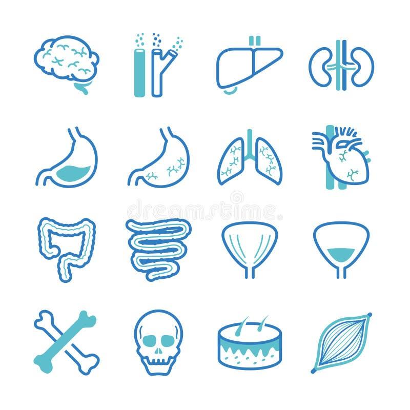 Установленные значки человеческого органа иллюстрация вектора