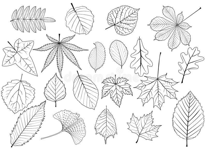 Установленные листья дерева, иллюстрация вектора