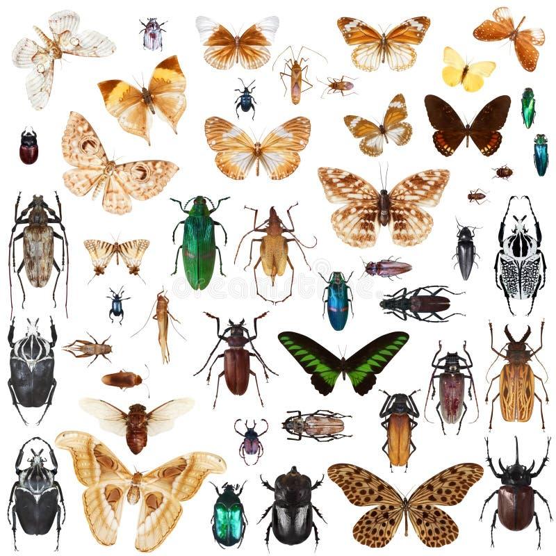 установленные насекомые иллюстрация вектора