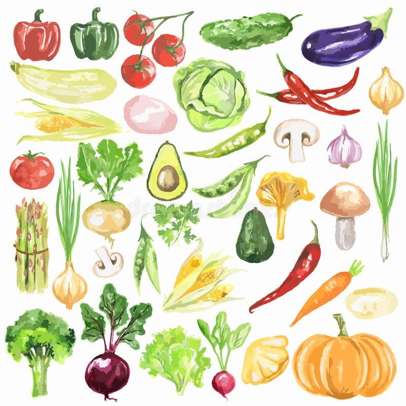 Установленные овощи акварели иллюстрация вектора