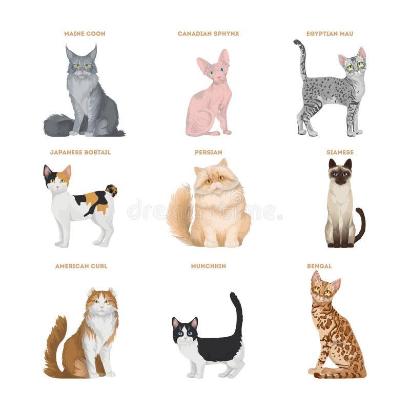 Установленные породы кота иллюстрация штока