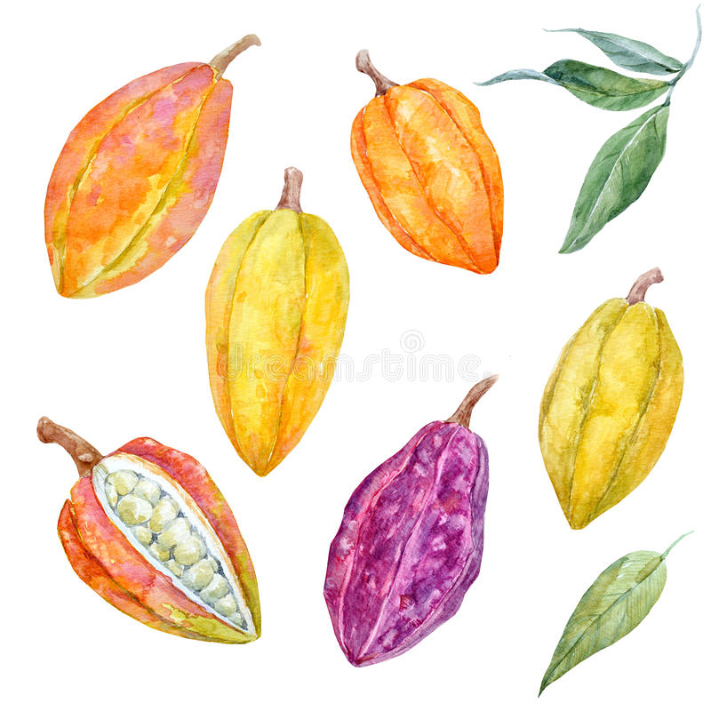 Установленные плодоовощи какао акварели иллюстрация штока