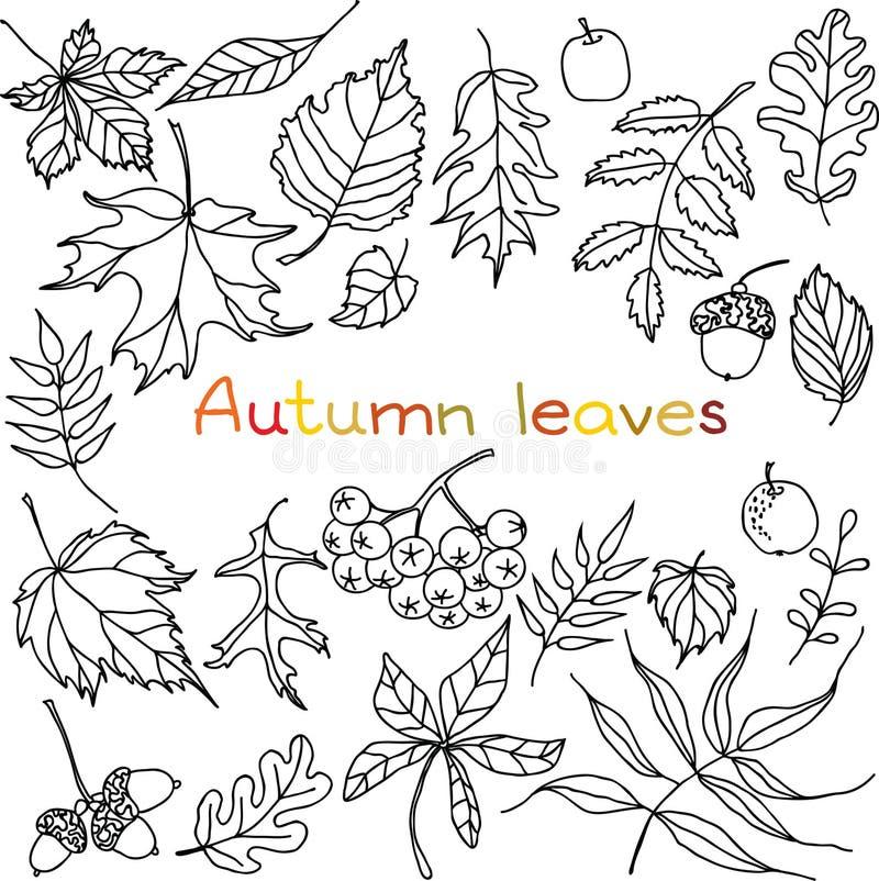Установленные doodles листьев осени стоковые фотографии rf