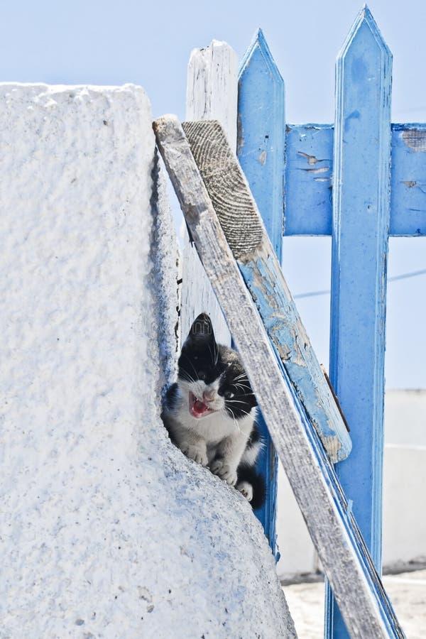 Устрашенный черно-белый котенок стоковое фото