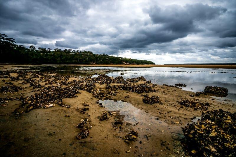 Устрица малой воды Eden стоковое фото rf