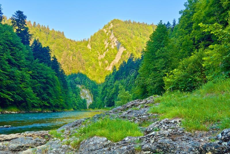 Утесы в утре в ущелье реки Dunajec стоковое фото rf