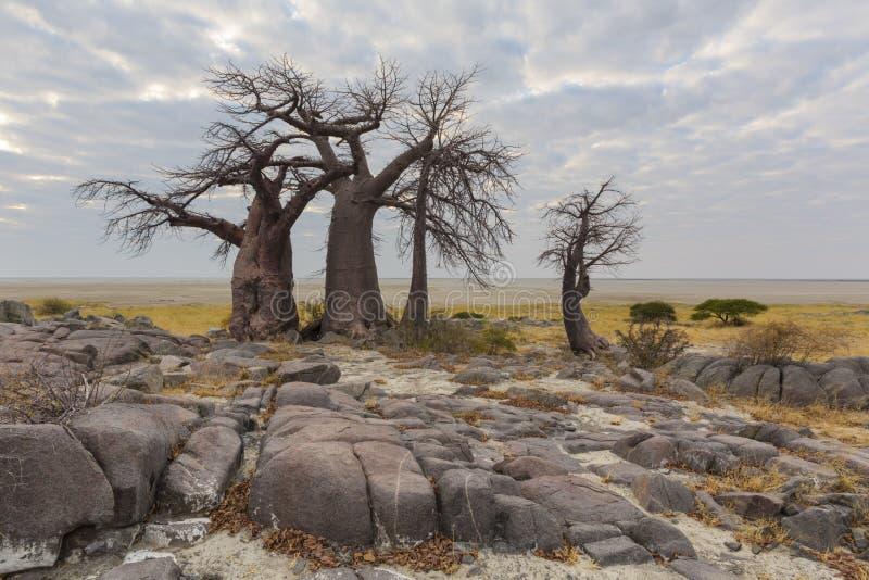Утесы и деревья баобаба стоковая фотография rf