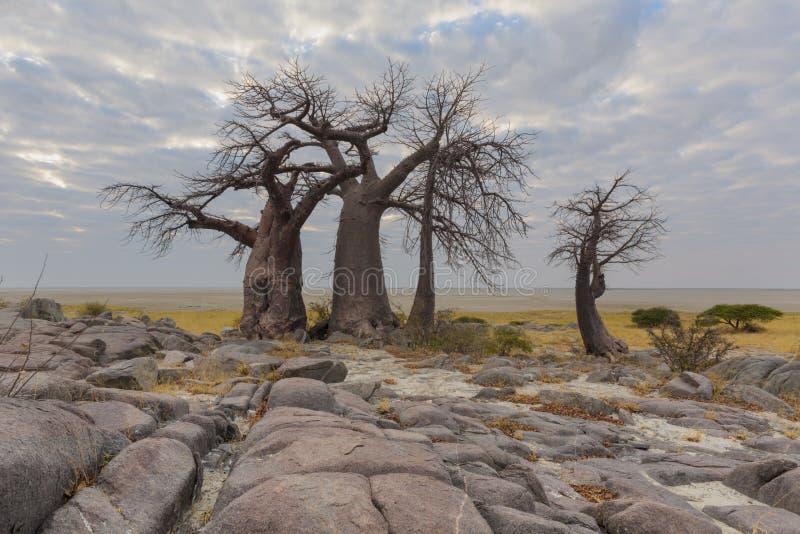 Утесы и деревья баобаба стоковое фото rf