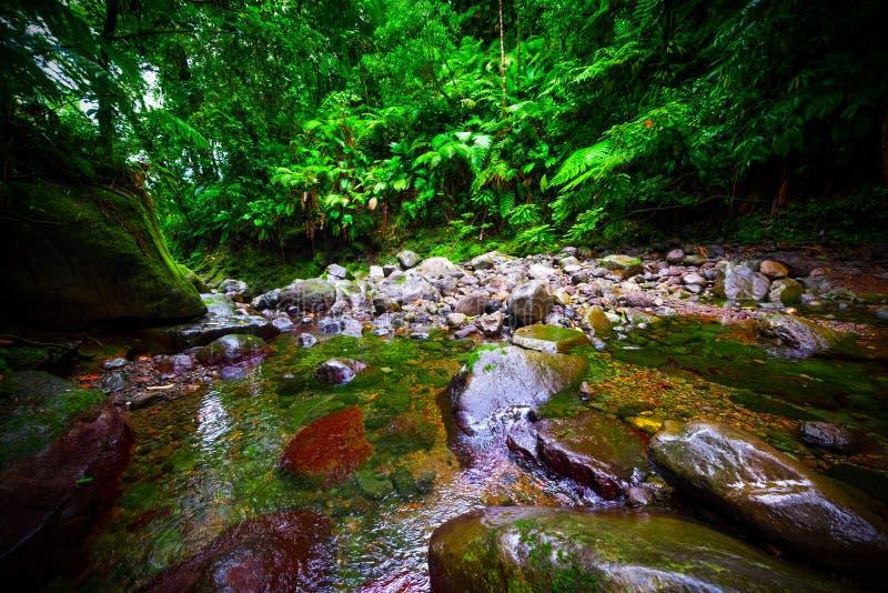 Утесы и небольшой поток в джунглях Basse Terre в Гваделупе стоковая фотография